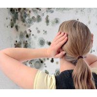 Как избавиться от плесени на стенках. Советы.
